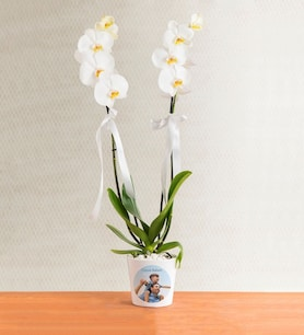 Kişiye Özel Saksıda Çift Dal Phalaenopsis Orkide