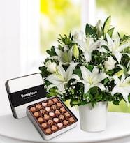 Beyaz Lilyumlar ve Çikolata