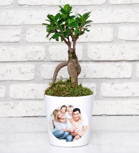 Kişiye Özel Fotoğraflı Ficus Bonsai