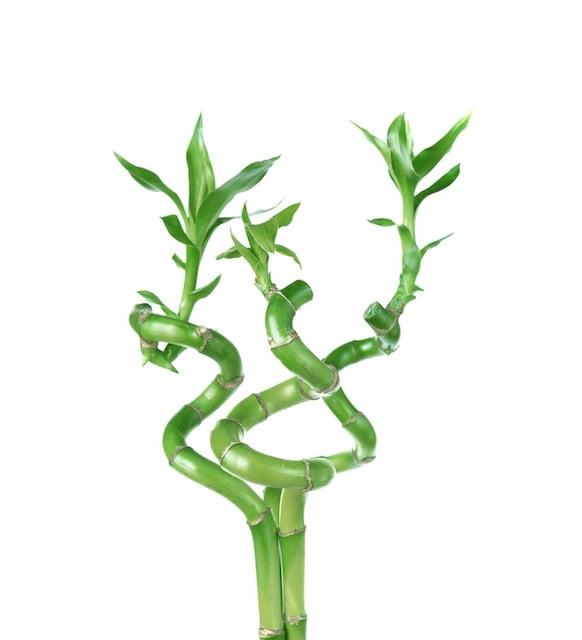 Dünya Bitki Gününe Özel Evinizi Güzelleştirecek Bitkiler