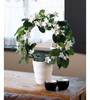 Yasemin Çiçeği Madagaskar Yasemini Stephonatis Ev ve Ofis Bitkisi
