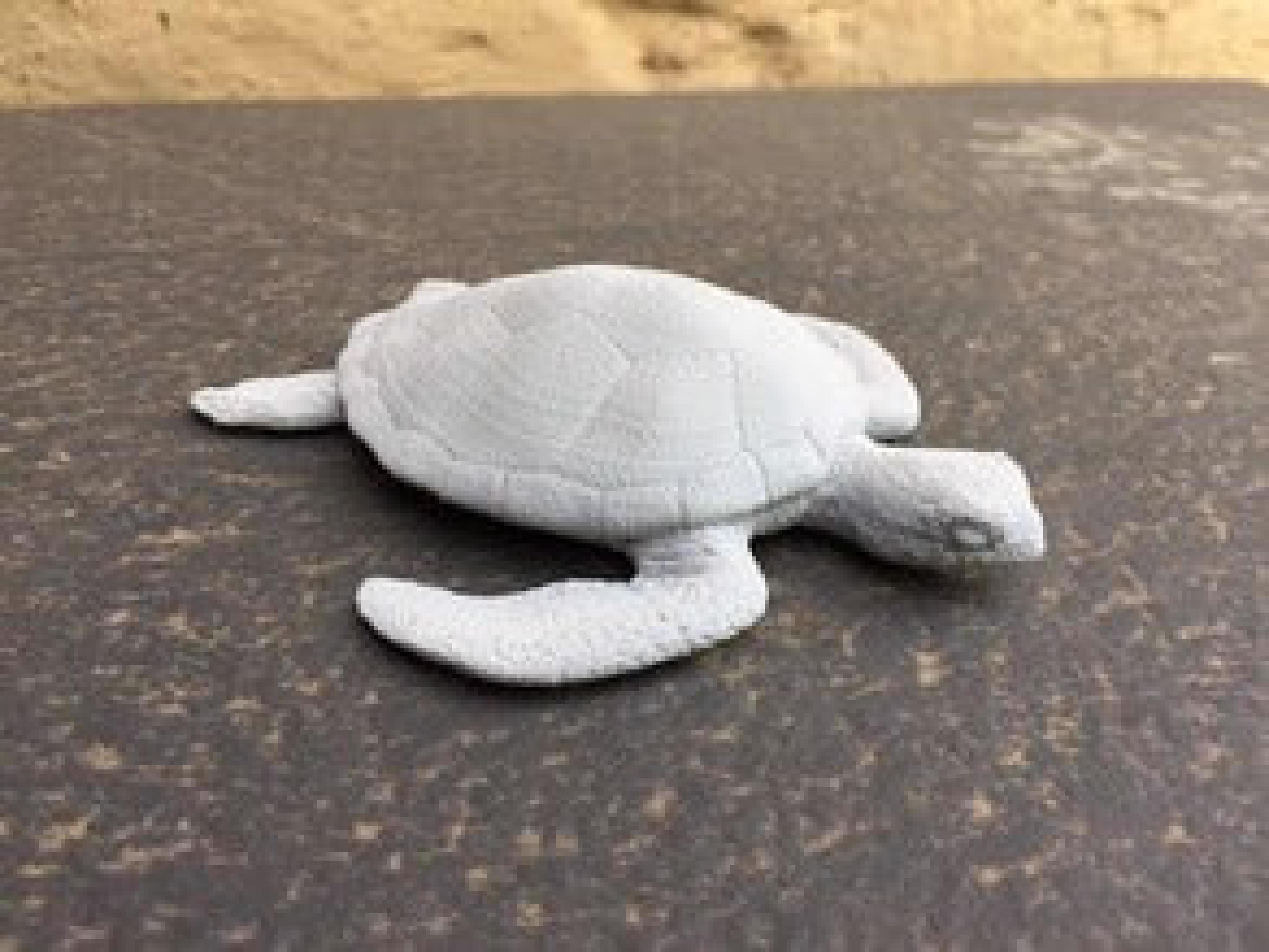 Deniz kaplumbağası Dekoratif Aksesuar Süs Eşyası Hediyelik