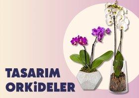 orkideler-varvar