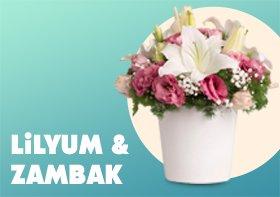 Lilyum & Zambak