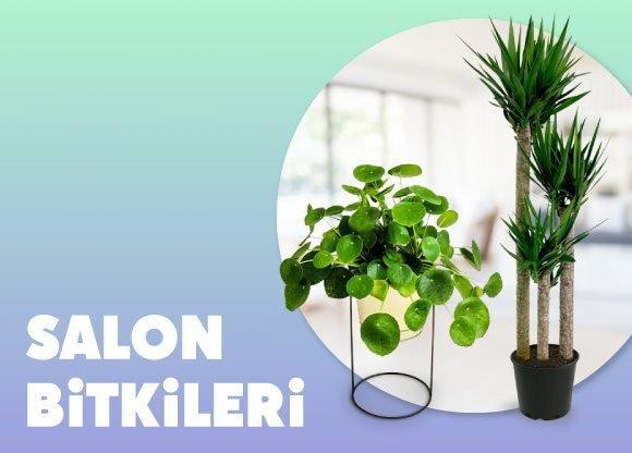 Salon Bitkileri