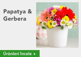 Papatya & Gerbera